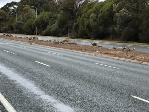 Median Strip stumps on Hindmarsh Drive